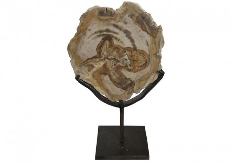 Wood Fossil