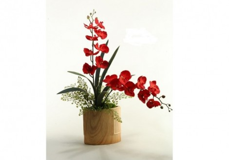 Deep Red Orchids