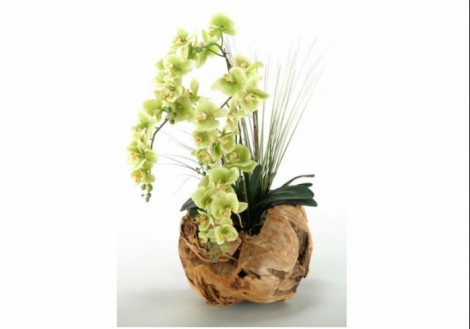 Phael Orchids in Wooden Ball